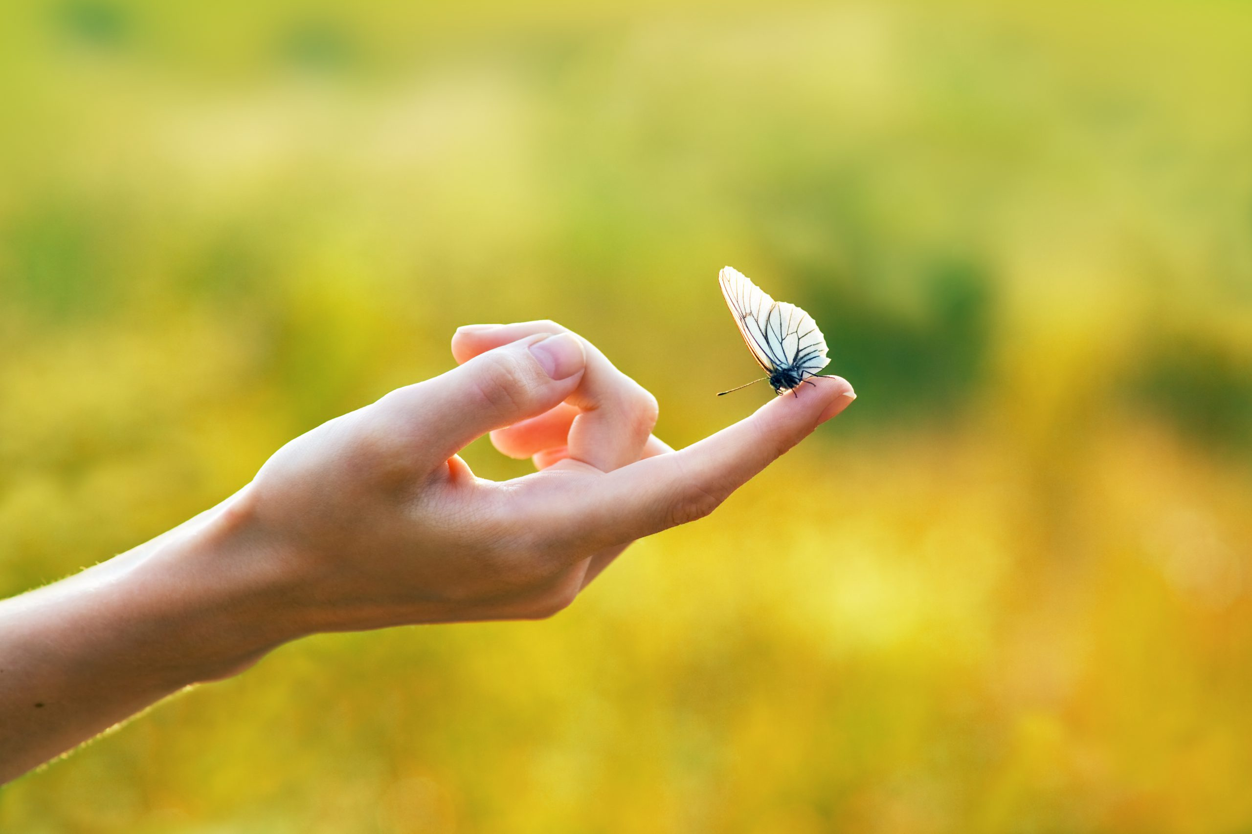 Yomento leadership training focuses on small actions, for big impact. Like the butterfly effect.